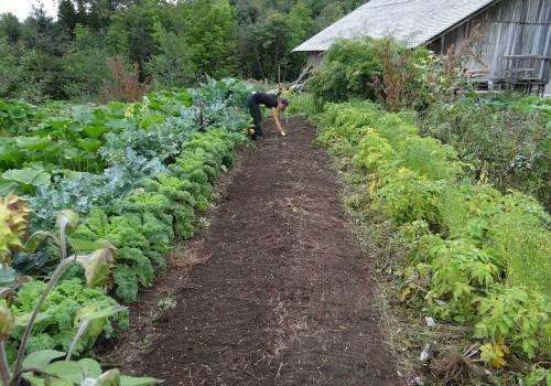 tips til haven – Gør din have forårsklar