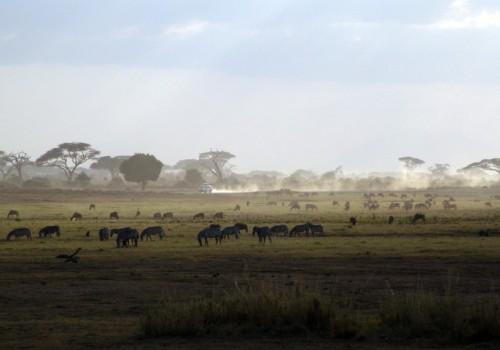 Hvad skal man opleve i Afrika?